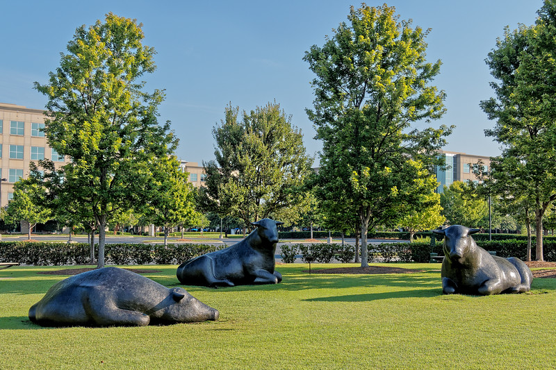 """Charlotte's Bulls in """"Our Park"""""""