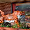Auburn Univserity Tiger Statue