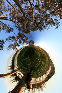 Eucalyptus Planet Angle 1