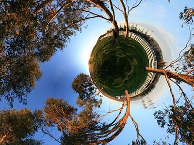 Eucalyptus Planet Angle 2