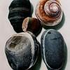 Piedras con Concha