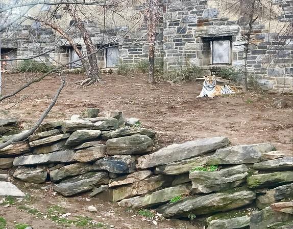 Philadelphia Zoo 12/16 - Rocky II View