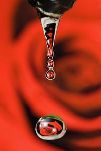 """Rose Water"""