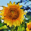 Mountain Sunflower