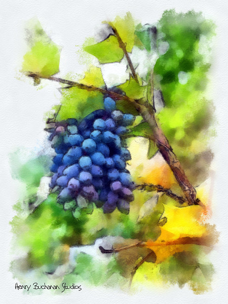 Spring Grapes  (NC)<br /> Studio Art