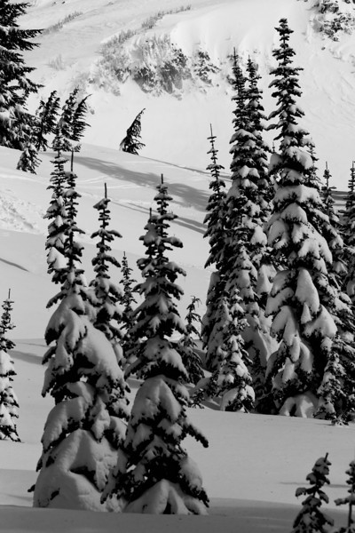 Mt Rainier B&W 010