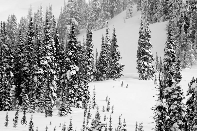 Mt Rainier B&W 009