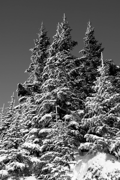 Mt Rainier B&W 022