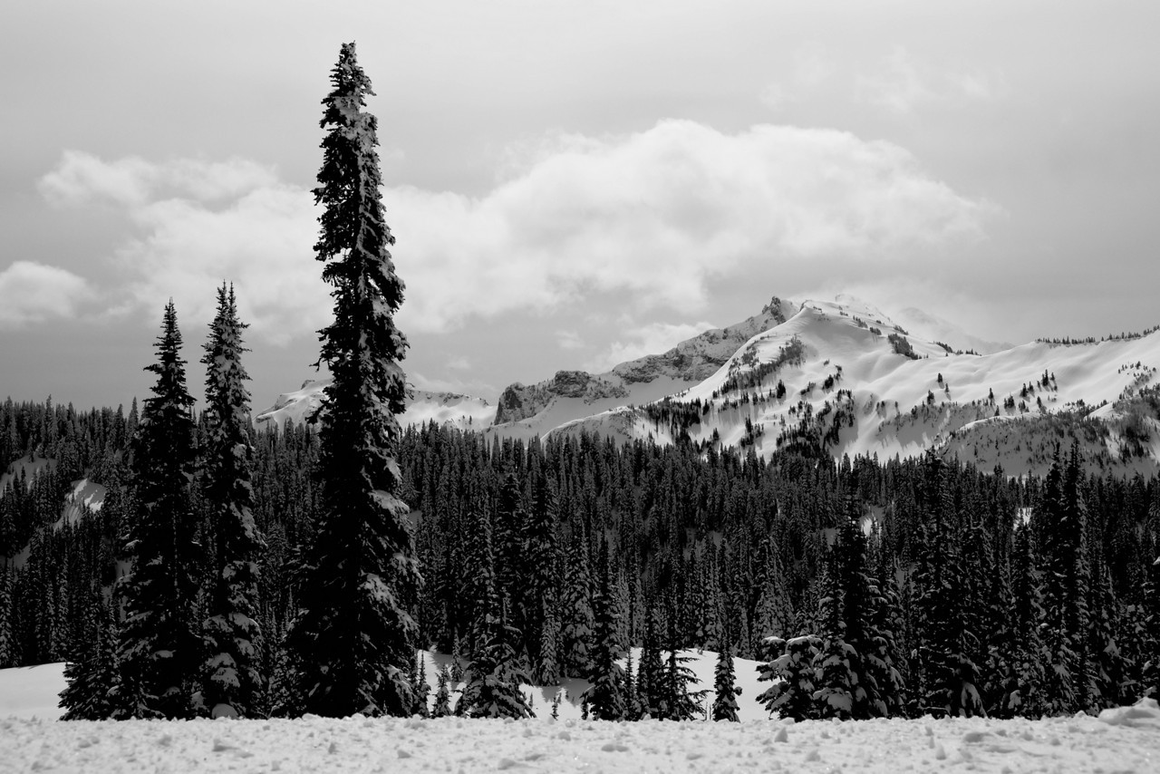 Mt Rainier B&W 002