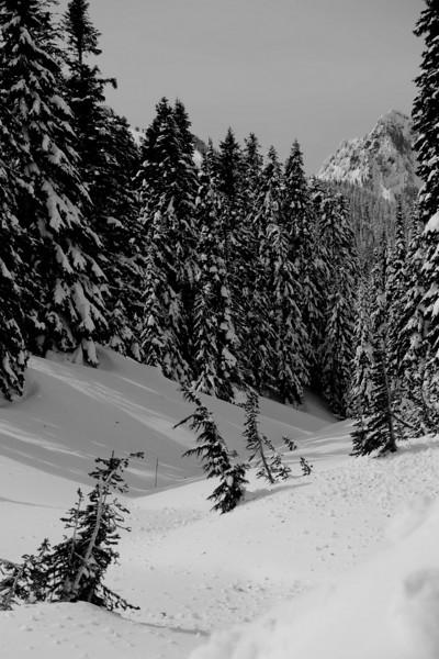 Mt Rainier B&W 015