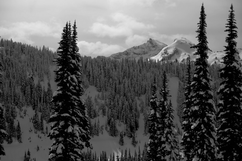 Mt Rainier B&W 016