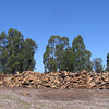 8. Walnut Mountain; May 2008<br /> <br /> A friend told us about this place that has mountains of scrap wood.