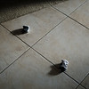 """Socks (Jason)<br /> From Series """"You Were Here""""<br /> 2011"""