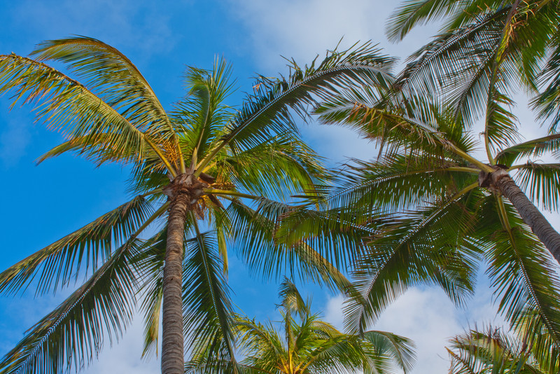 Sunseeker Palms