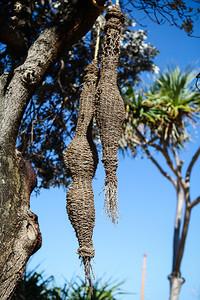 Cocoons, Leisa Russell - Swell Sculpture Festival 2016, Visit 1; Currumbin, Gold Coast, Queensland, Australia; 12 September 2016. Photos by Des Thureson - http://disci.smugmug.com