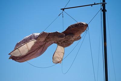 Wait and See, Julia Birch - Swell Sculpture Festival, Pacific Parade, Currumbin Beach, Gold Coast, Queensland, Australia. Photos by Des Thureson:  http://disci.smugmug.com.