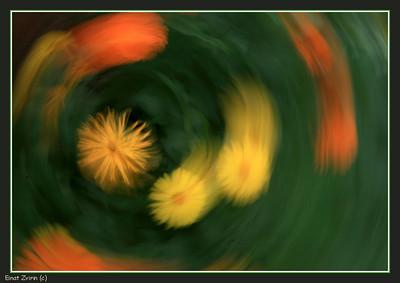 Daisy Whirlpool