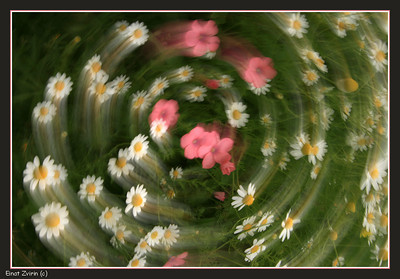Dance of the Daisies