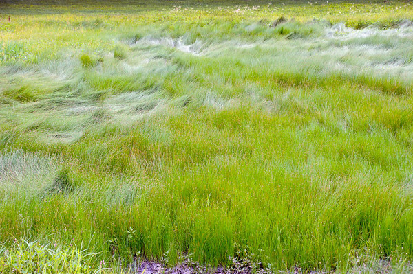 Tall Grass Color
