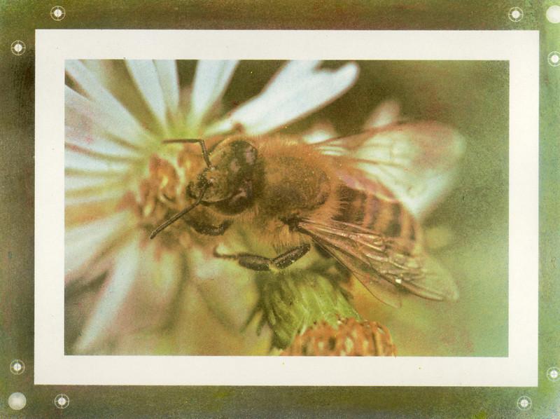 Last Bee of Summer