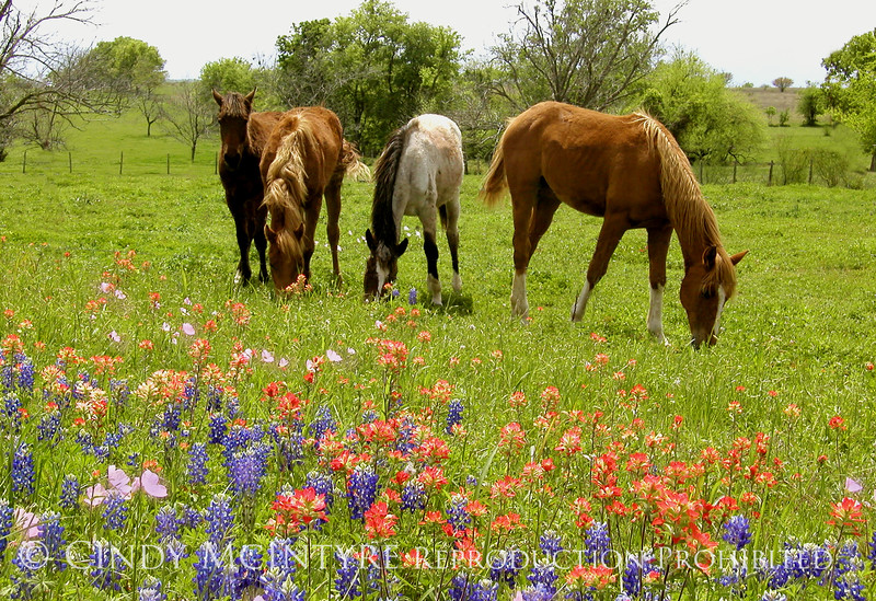 Yearlings and Wildflowers