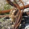 Rusty wire rope with unlaid strands and fragments of hemp rope