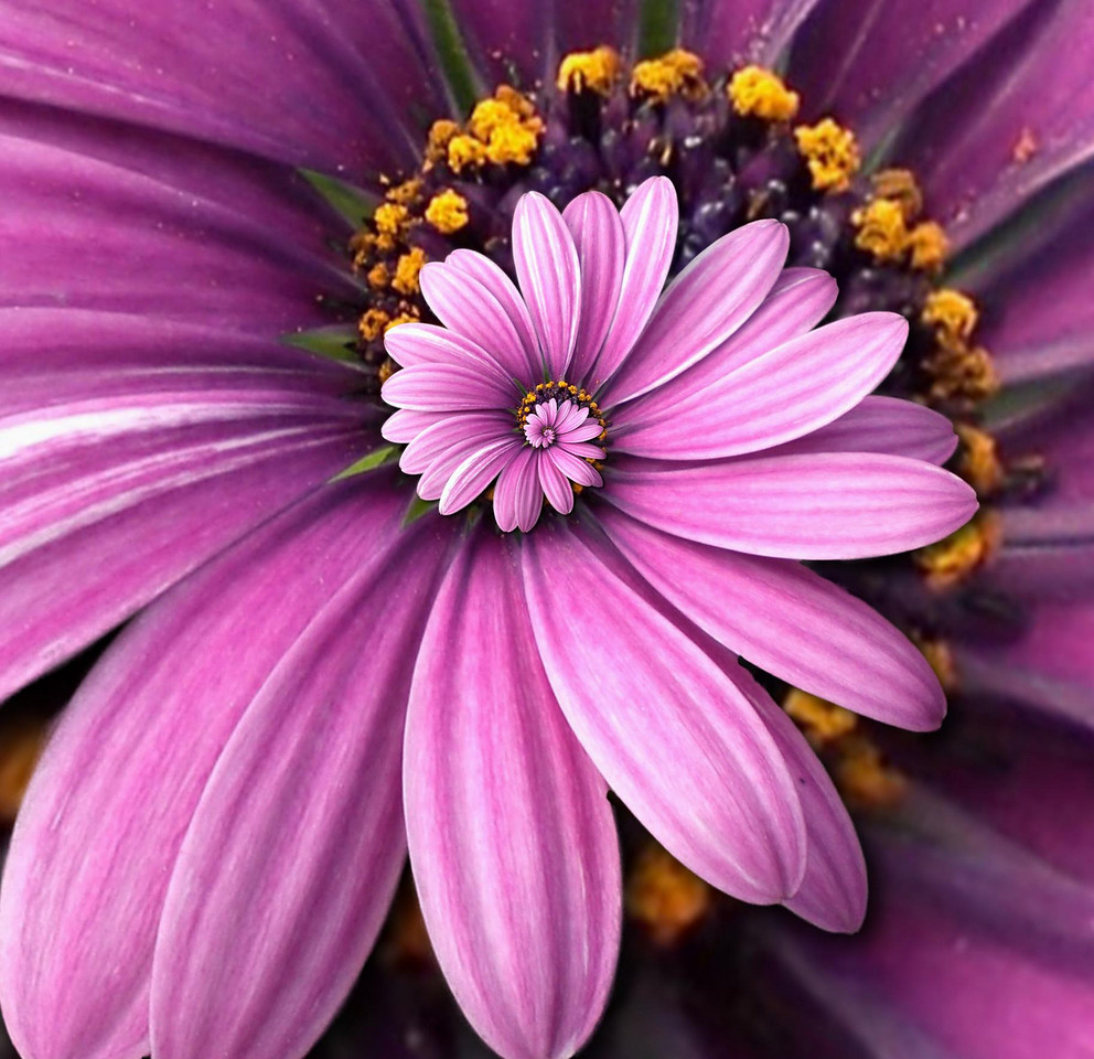 Another Purple Flower Droste