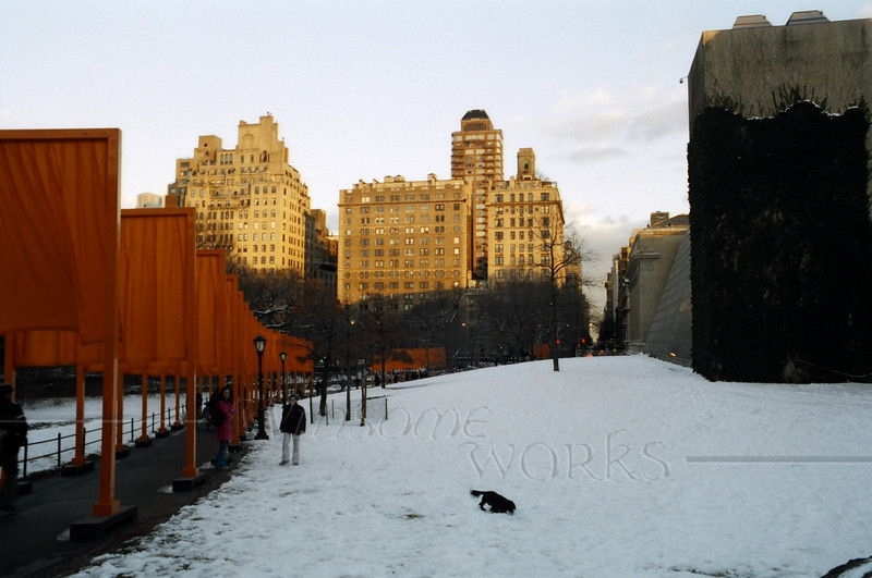 """Dog and Owner playing in view of """"The Gates"""", Central Park"""