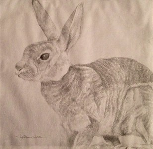 "Cotton Tail Silverpoint on Fleur Ground on  Heavy Duty Bee Paper 14""x17"""