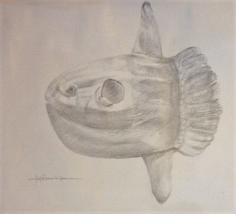 "Mola, Mola 11""x14"" Silverpoint on Fleur Ground & 110lb. Bee Drawing Paper"