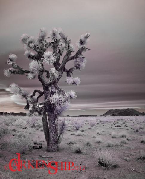 Joshua Tree Nation Park– Joshua Tree, CA<br /> Infrared image of the parks namesake.