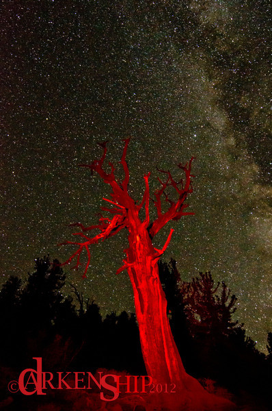 Bristle Cone Pine– White Mountain, CA<br /> The galactic sky smiles down as the struggle to survive quietly rages on.