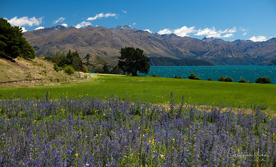 Wanaka, New Zealand