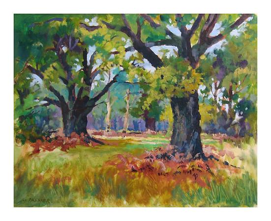 ' Mighty Oaks ' Sherwood Forest
