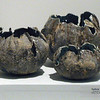 Ceramics, Seaform Trio - Janny Lai, MFA Fall '08