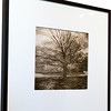 Denise Schilling<br /> Untitled (Tree)