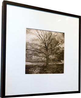 Denise Schilling<br /> Untitled (Tree)