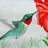 Ruby-throated Hummingbird, 4x6 watercolor, nov 21, 2015 DSCN9115