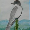 1-Eastern Kingbird, 6x8 5, watercolor, nov 19, 2015 DSCN9098A