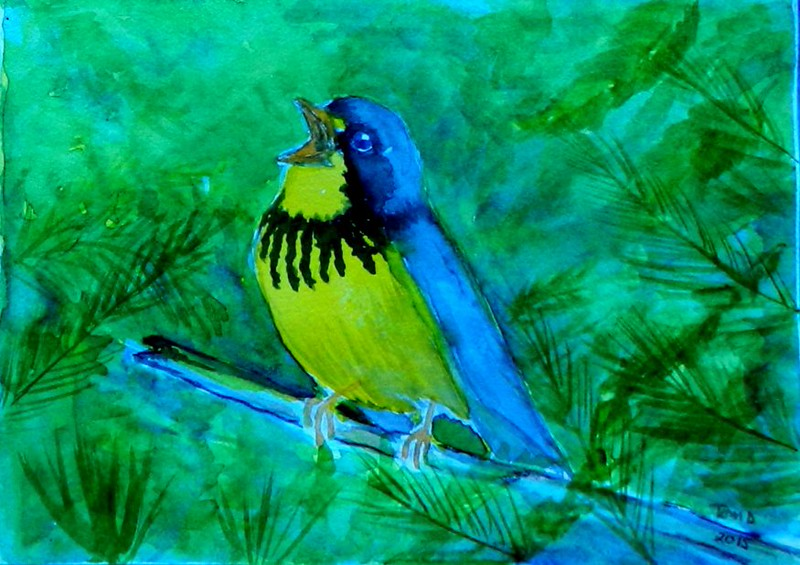 1-Canada Warbler, 4x6, watercolor, nov 16, 2015 DSCN9080