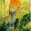 1-Broad-billed Motmot - Panama  6x8 5, watercolor, dec 4, 2015 DSCN9171A