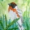 Bay-breasted Warbler, 4x6, watercolor, nov 18, 2015 DSCN9094A
