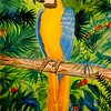 1-Blue and Gold Macaw, Brazil  11x15, watercolor, dec 3, 2015 DSCN9154A