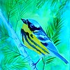 1-Magnolia Warbler, 4x6, watercolor, nov 16, 2015 DSCN9080