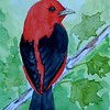 1-Scarlet Tanager  4x6, watercolor, nov 17, 2015 DSCN9088