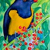 Spot-crowned Euphonia, 4x6, watercolor, dec 8, 2015 DSCN9179A