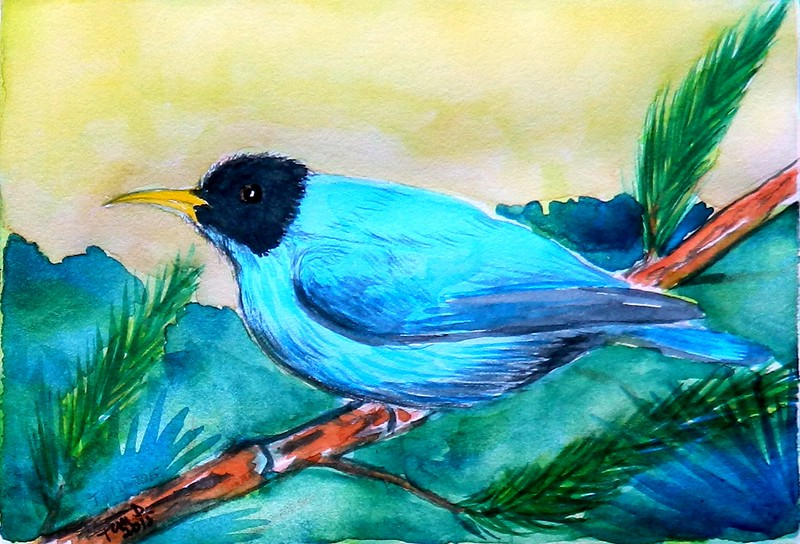 Green Honeycreeper, 4x6, watercolor, dec 8, 2015  DSCN9179A