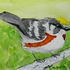 Chestnut-sided Warbler, 4x6, watercolor, nov 21, 2015 DSCN9115