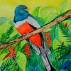 1-Elegant Trogon, 11x15, watercolor, dec 12, 2015 DSCN9194