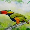 1-Golden-collared Toucanet, western Amazon basin  8 5x12, watercolor & mixed media, nov 11, 2015 DSCN9048AA